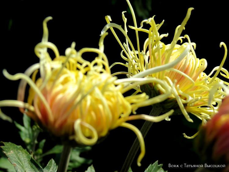 vystavka-cvetov-v-krymu