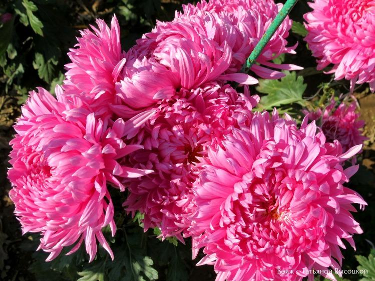 vystavka-cvetov-v-yalte