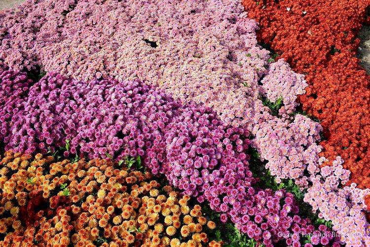 vystavka-cvetov-v-nikitskom-sadu-2018