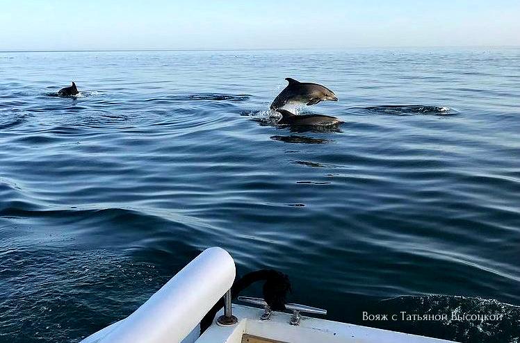 delfiny-v-novom-svete