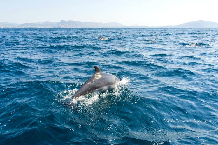 ehkskursiya-k-delfinam