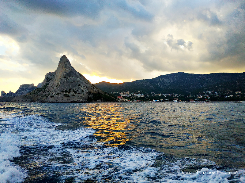 где увидеть дельфинов в Крыму